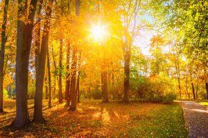 46425130 - autumn landscape